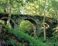 Rocks East Woodland