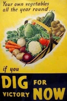 Your own vegetables all the year round if you dig for victory now
