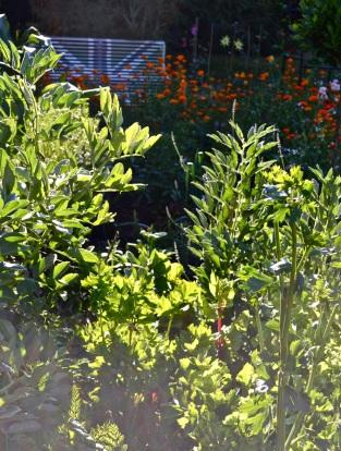 WI garden 10 July 2014 - 08