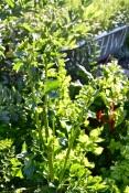 WI garden 10 July 2014 - 11
