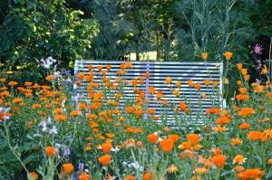 WI garden 10 July 2014 - 15