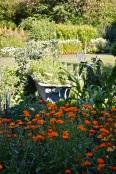 WI garden 10 July 2014 - 18