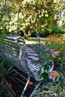 WI garden 10 July 2014 - 19