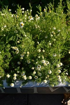 WI garden 10 July 2014 - 30