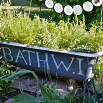 WI garden 10 July 2014 - 43