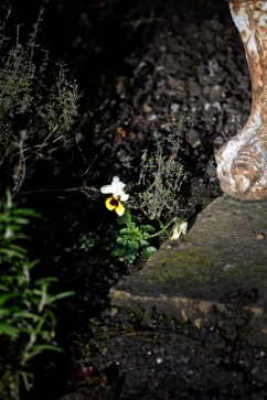 botanic 27 dec16
