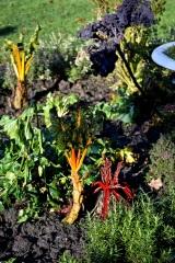 botanic 27 dec17