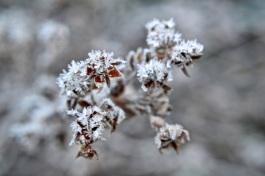 frost 29dec07