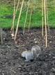 Sally garden photos01