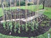 Sally garden photos04