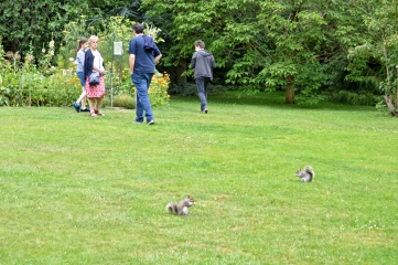 tourists and squirrels alike love our garden