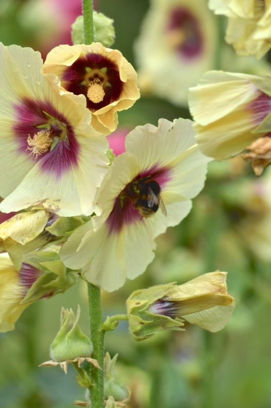 more bees...