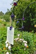 Elaine's crocheted clematis took pride of place