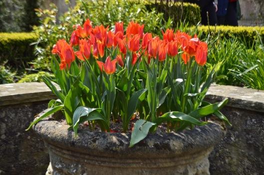 The Bath Priory open garden - 10