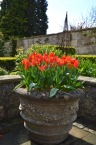 The Bath Priory open garden - 11