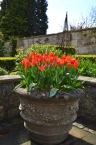 The Bath Priory open garden - 11