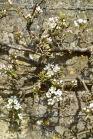 The Bath Priory open garden - 16