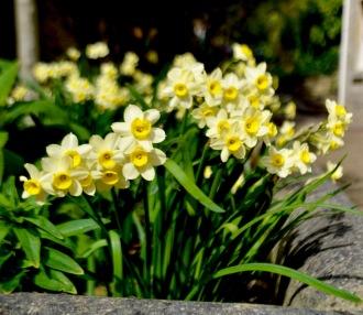 The Bath Priory open garden - 23