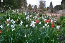 The Bath Priory open garden - 33