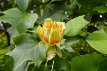 botanical - 3