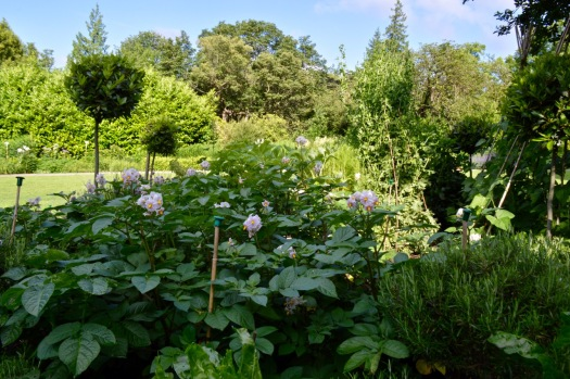 gardens - 19