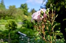 gardens - 31