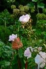 gardens - 35