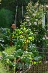 gardens - 44