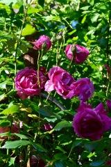 gardens - 65