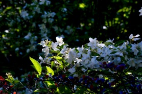 gardens - 67