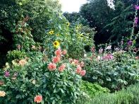 wi garden 20 july 2017 - 14