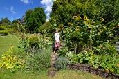 wi garden 20 july 2017 - 5