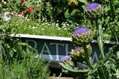 wi garden 20 july 2017 - 7