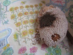 02 feb sundlower seeds